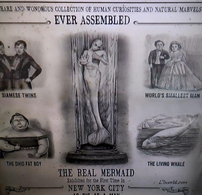 P.T. Barnum Mermaid  5 31 2013