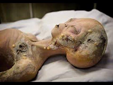 dead alein body 1